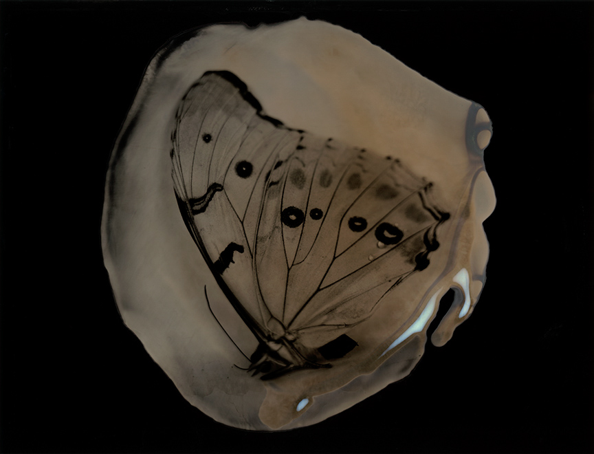 Collodion Cocoon